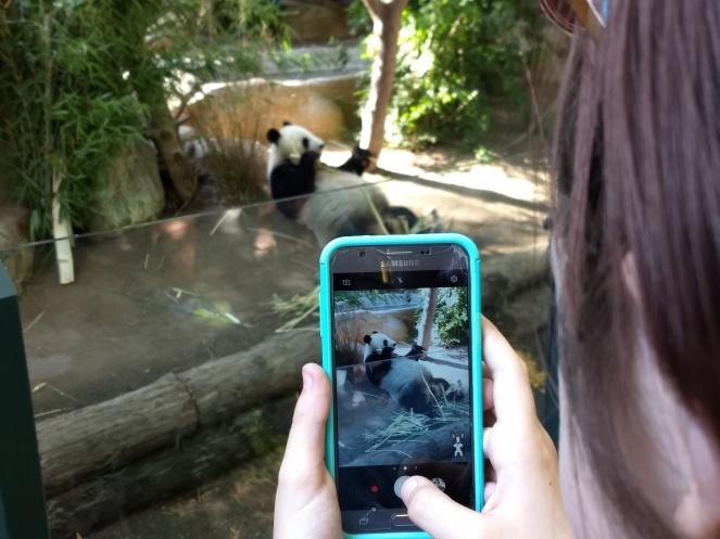 Mama Panda at the zoo